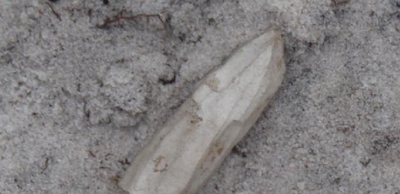 На Ямале найден уникальный артефакт, которому более 3 тысяч лет