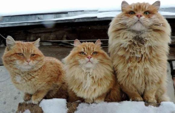 Зоозащитница из Бердянска нашла клад благодаря своей любви к котам