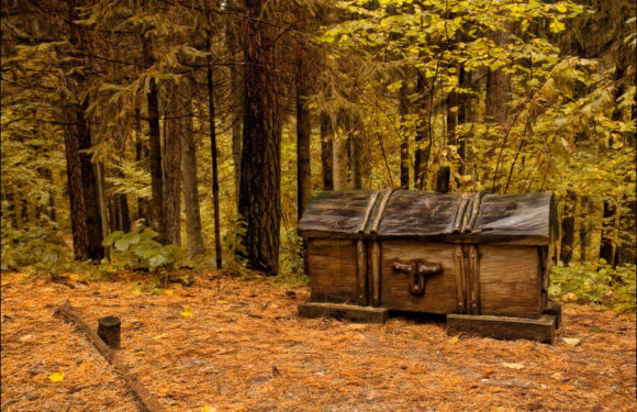 Поиск в лесу – корни, кроны и находки