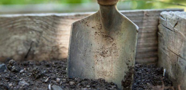 Жительница Архангельской области нашла клад в огороде