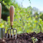 Жительница Краснодарского края нашла клад в своем огороде