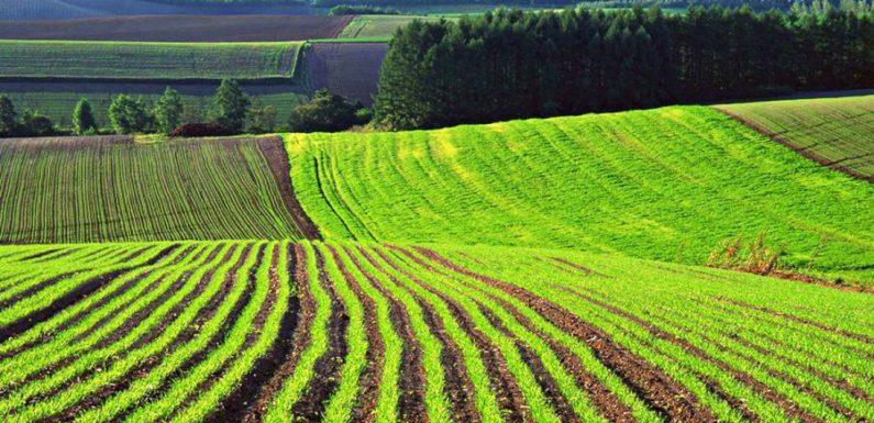 На фермерском поле в Англии найден очень редкий клад