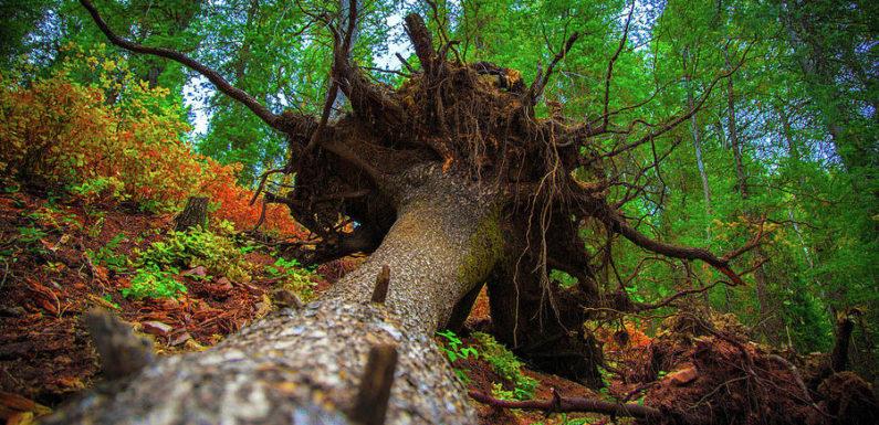 В Словакии найден средневековый клад под поваленным деревом