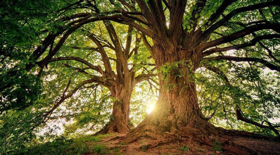 Тайны ближнего леса